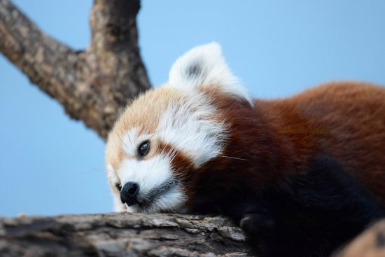 Birmingham Zoo: photo1.jpg