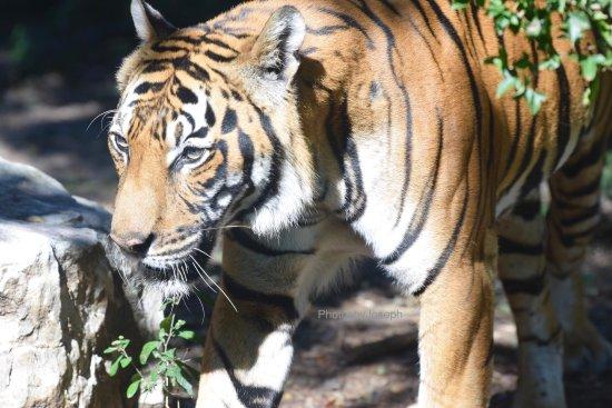 Birmingham Zoo: photo3.jpg