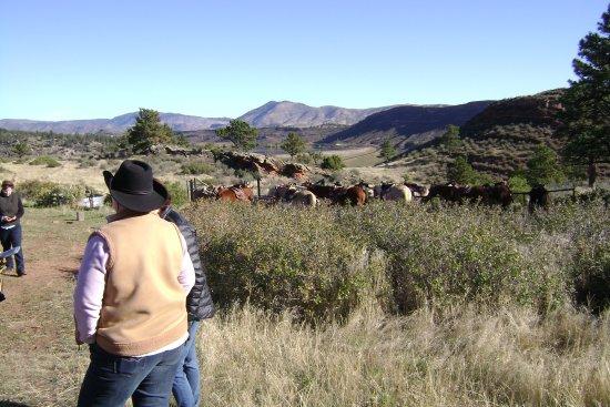 Снимок Sylvan Dale Guest Ranch