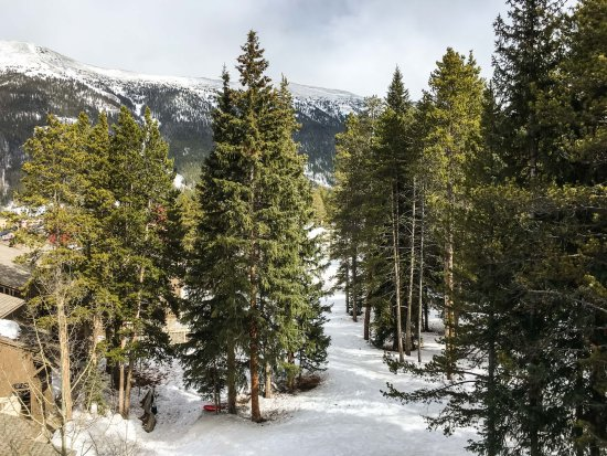 Copper Mountain, CO: Picturesque Trees