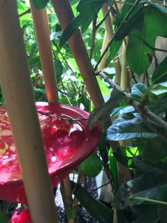 Audubon Butterfly Garden And Insectarium New Orleans La Top Tips Before You Go With Photos