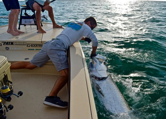 Boca grande tarpon picture of silver lining charters for Captain d s country style fish