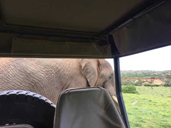 Amakhala Safari Lodge: photo0.jpg