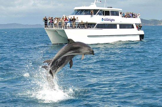 全天的岛屿湾,岩洞和奥克兰的海豚游船之旅