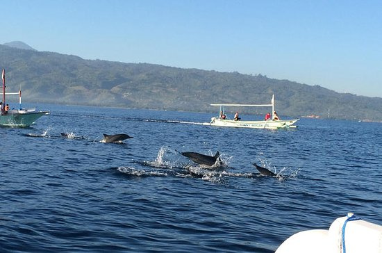 Small-Group Dolphin Watching...