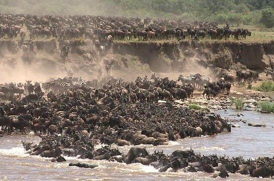 Safari de 3 días en Masai Mara