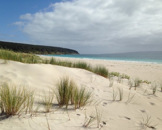 Penneshaw, ออสเตรเลีย: Long wide white sandy beach.  Gorgeous