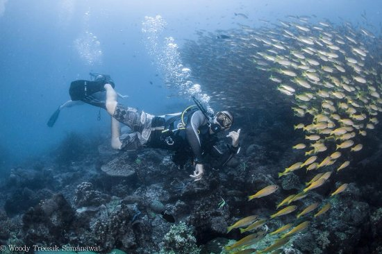 PKT Diving