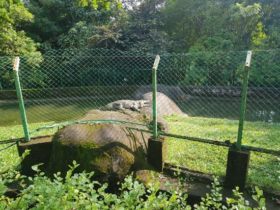 Neyyar Wild Life Sanctuary: 20171022_152947_large.jpg