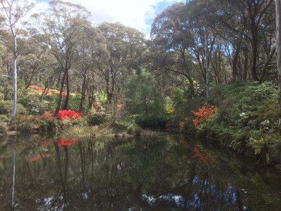 Blackheath, Australia: October in the gardens