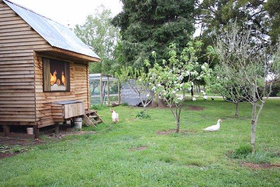 Barrington, Australia: Chook house and orchard