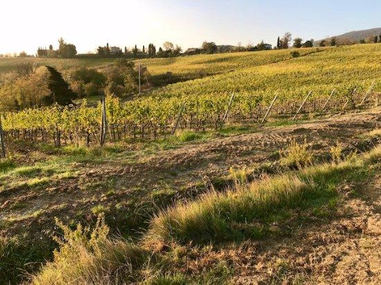 Il Casale del Cotone : The surrounds