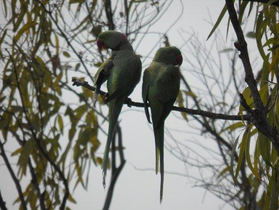 India Habitat Centre Foto