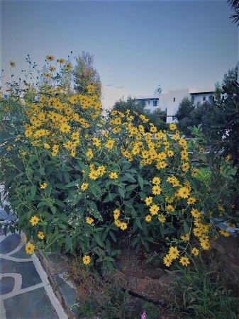 Agios Prokopios, Grécia: Beautiful Flowers all over the grounds