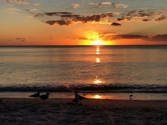 Beach at Sunset - Picture of LaPlaya Beach & Golf Resort, A Noble House  Resort, Naples - Tripadvisor