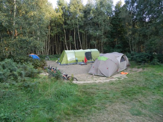 Eco Camp UK - Beech Estate Woodland Campsite: A forest tent pitch
