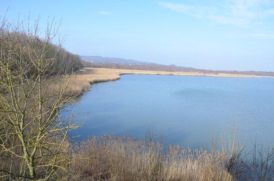 Europaisches Vogelreservat Heerter See