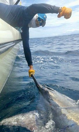 Boca Chica, Panama: Jose holding on to Steve's 1st Blue Marlin well over 800 pd. with Come Fish Panama