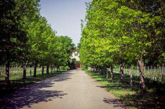 Tattendorf, ออสเตรีย: Einfahrt zum landgasthaus imweingarten johanneshof