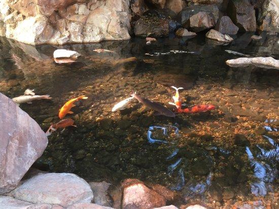Flamingo Wildlife Habitat : photo0.jpg