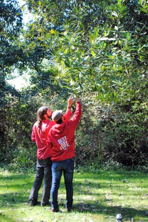 Valdivia, Chile: Discovering fruits and traditional plants - Bosque Antiguo