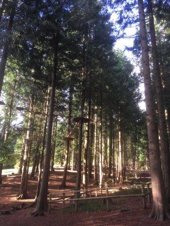 Forest of Dean, UK: photo0.jpg