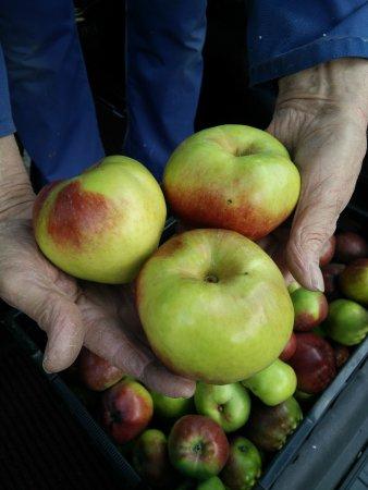 Alveringem, Belgium: Onze eigen appels zorgen voor het lekkere appelsap bij het ontbijt.