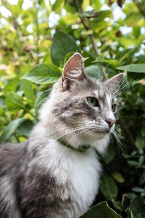 Alveringem, Belçika: De huiskat , Fido, is de vriend van iedereen !