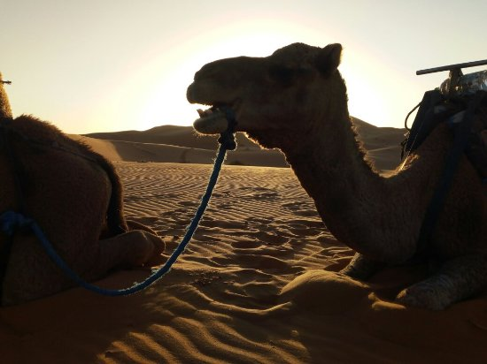 Aspects Of Morocco Day Tours : IMG_20171021_191239_large.jpg
