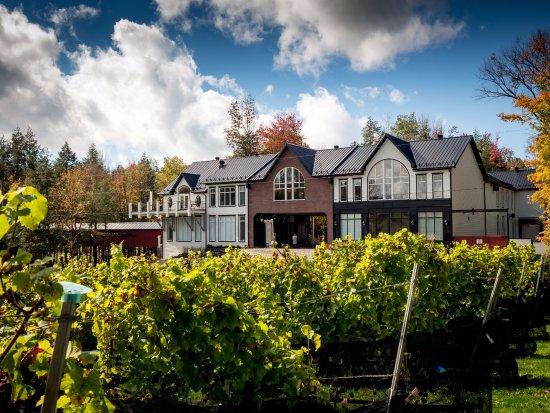 Dunham, Kanada: Le vignoble