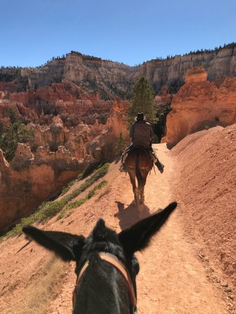 Canyon Trail Rides : Awesome ride! We rode Mary Jane & Disco, both mules through Bryce Canyon!