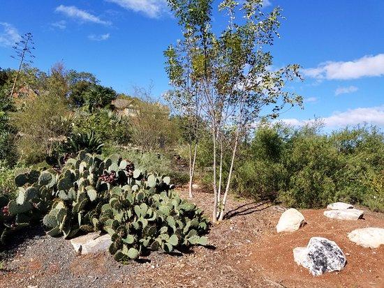 South Carolina Botanical Gardens: cactus