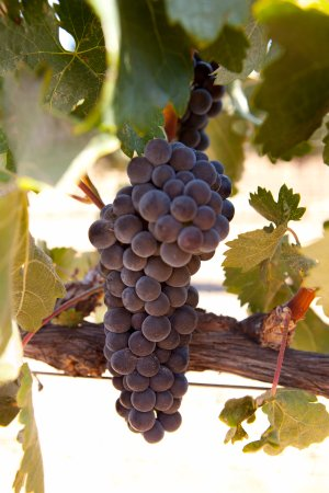 Templeton, CA: Tempranillo at the Estate - one of our favorites!