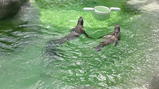 North Carolina Zoo: 20171028_131052_large.jpg