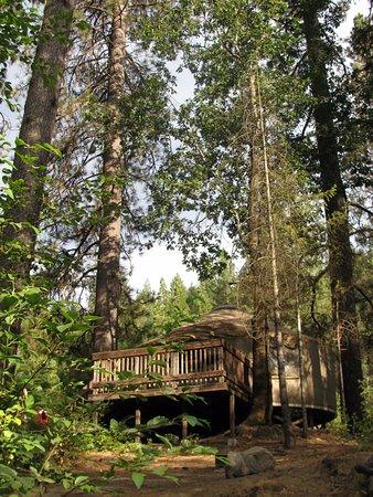 Yosemite Lakes RV Resort: the yurt from the river bank