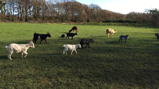 Ballycross Apple Farm: photo0.jpg
