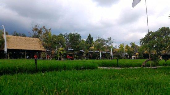 foto de bebek tepi sawah ubud pemandangan hijau di restoran