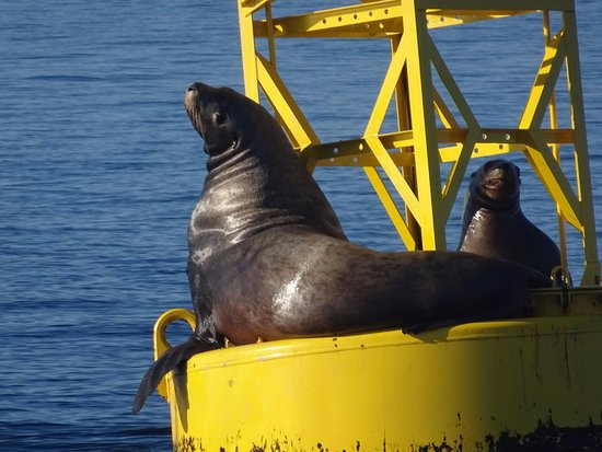 Port Townsend, WA: These two were sunning on a buoy that we passed.