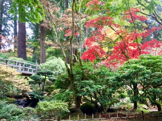 Japanese Garden in early November - Picture of Portland Japanese ...