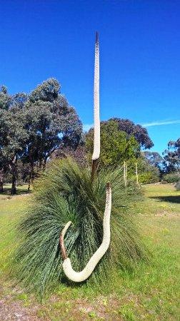 Pomonal, Australia: Amazing  native plants