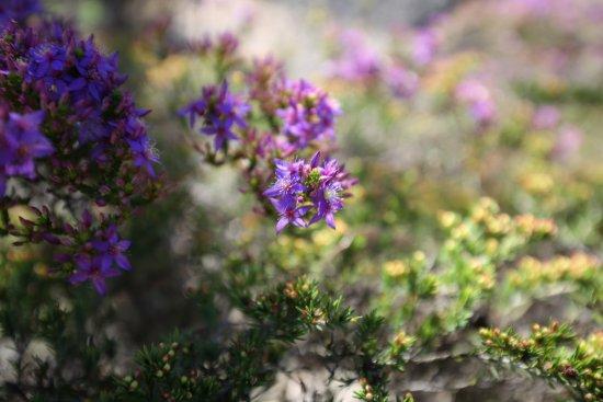 澳大利亚国家植物园
