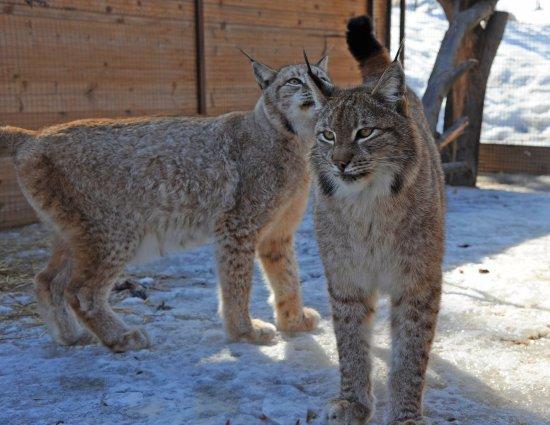 ЦарьГрад Зоопарк