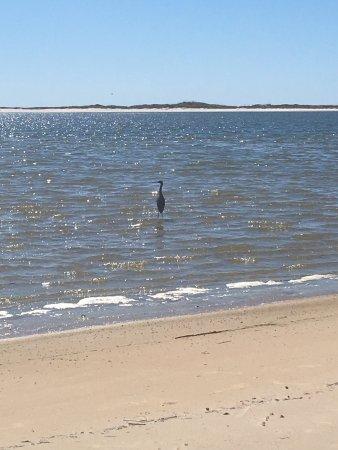 Dauphin Island West End Public Beach