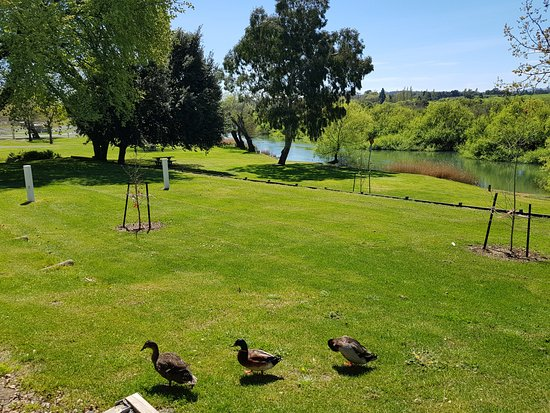 Longford, Australia: Quick, Quack and Scratch