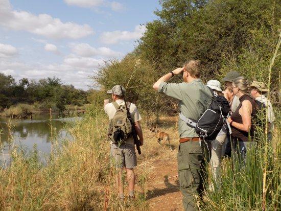 Alldays, Sudáfrica: Guided Bushwalks
