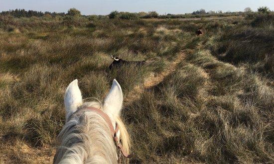 Promenade à cheval, Chez Elise : photo0.jpg