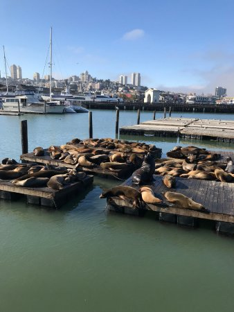 Silver Lion Service - Private Tours: Pier 39
