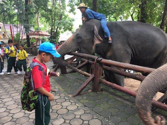 Thai Elephant Conservation Center: มีกล้วย อ้อย ขายเพื่อให้ผู้เข้าชมเอาให้ช้าง