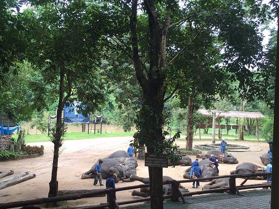 Thai Elephant Conservation Center: การแสดงของช้างแสนรู้