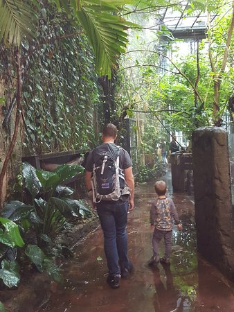 Universeum: rainforest